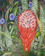 Bromeliad Originals - Torch Bromeliad by Jim Soldo