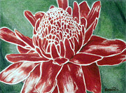 Ginger Drawings Posters - Torch Ginger Poster by Mark  Bonner