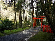 Torii Photos - Torii in the Trees by Cathleen Cawood