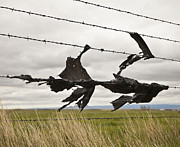 Small Towns Metal Prints - Torn Bags on a Barbed Wire Fence Metal Print by Paul Edmondson