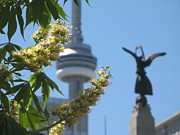 Nature With Architecture - Toronto spring by Alfred Ng