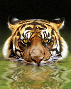 Wildlife Art Digital Art Framed Prints - Torrent Framed Print by Bill Fleming