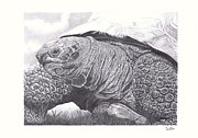 Tortoise Print by Dave Dudley