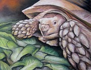 Reptiles Painting Prints - Tortoise Print by Melinda Saminski