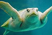 Ocean Photography Photos - Tortuga Sonrisa by Skip Hunt