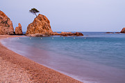 Photogaph Art - Tossa De Mar Lonely Tree by Josh Whalen