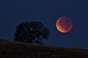 Donovan Conway Art - Total Lunar Eclipse by Donovan Conway Photography