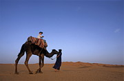 Looking Over Shoulder Posters - Touareg man leading boy riding camel in Sahara Desert Poster by Sami Sarkis