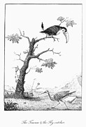 Narrative Of An Expedition Prints - Toucan And Flycatcher Print by Granger