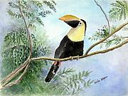 Toucan Paintings - Toucan by Arline Wagner