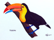 Wildlife Framed Prints Drawings Framed Prints - Toucan Framed Print by Frederic Kohli