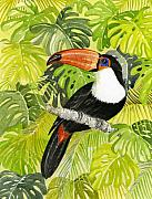 Toucan Originals - Toucan in Jungle by Frances Evans