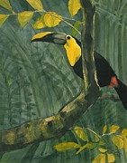 Toucan Paintings - Toucan in Jungle by Tod Locke