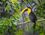 Toucan Originals - Toucan by Lou Spina