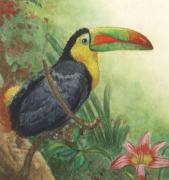Tropical Wildlife Paintings - Toucan by Robert Casilla