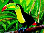 Toucan Framed Prints - Toucan Sam Framed Print by Anne Marie Brown