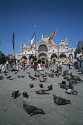 Basillica Framed Prints - Tourists Feed The Pigeons In Saint Framed Print by Taylor S. Kennedy