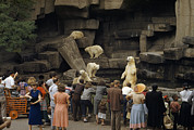 Tourists Watch Captive Polar Bears Print by B. Anthony Stewart