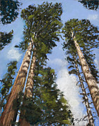 Sequoia Paintings - Towering Sequoias by Mary Benke