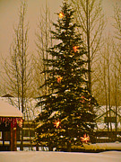 Summit County Colorado Photos - Town Tree by Bob Berwyn