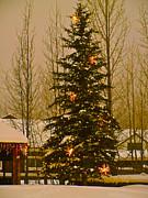 Bob Berwyn - Town Tree