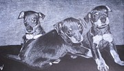 Puppies Mixed Media - Toy Manchester Terrier Puppies by David Pry
