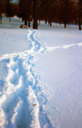 Snowmageddon Prints - Tracks Print by Angela Siener