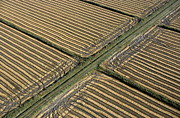 Repetition Photos - Tracks in harvested fields by Sami Sarkis