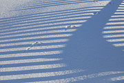 Kenai Peninsula Prints - Tracks in the Shadows Print by Tim Grams