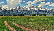 Grand Teton Framed Prints - Tracks Leading Through Meadow Framed Print by Jeff R Clow