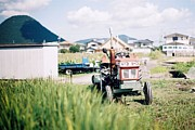 Rice Paddy Prints - Tractor Print by Dapple Dapple
