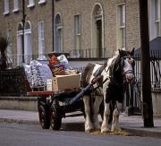 Stood Photos - Traditional Horse & Cart, Rathmines by The Irish Image Collection