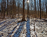 Susan Leggett - Trail in Winter