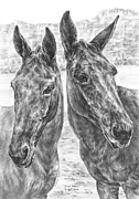 Donkey Drawings Framed Prints - Trail Mates - Mule Portrait Art Print Framed Print by Kelli Swan