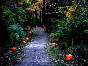 Lafite Digital Art Prints - Trail of 100 Jack-o-lanterns Print by Steve Karol