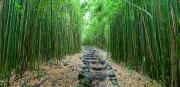 Amazing Framed Prints - Trail through Bamboo Forest Framed Print by Monica & Michael Sweet - Printscapes