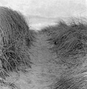 Sand Dune Posters - Trail Through The Sand Dunes Poster by Daniel J. Grenier
