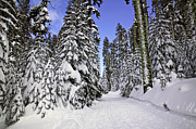 Snowy Winter Prints - Trail through trees Print by Garry Gay
