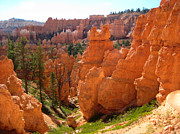 Stephen Bartholomew - Trail View Bryce Canyon