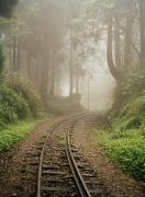 Intervention Metal Prints - Train Tracks Found On The Forest Floor Metal Print by Justin Guariglia