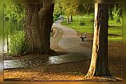 Deschutes River Posters - Tranquil Path Poster by John Melton