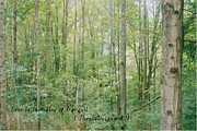 Thessalonians Posters - Tranquil Woods Poster by Terrilee Walton-Smith