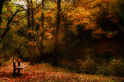 Autumn. Fall Colors - Tranquility by Anthony Rego
