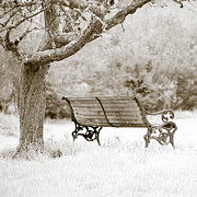 Bench Framed Prints - Tranquility Framed Print by Frank Tschakert