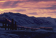 Winter Scenes Photos - Trans Alaska Pipeline At Dawn by George F. Herben