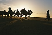 Camel Photos - Trans-sahara Desert Camel Expedition by Carsten Peter
