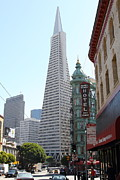 San Francisco Prints - Transamerica Pyramid Through North Beach San Francisco . 7434 Print by Wingsdomain Art and Photography