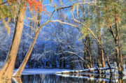 Fall Four Framed Prints - Transitions  Framed Print by JC Findley