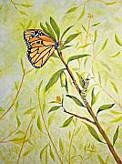 Monarch Paintings - Transitions by Roseann Gilmore