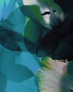 Translucent Petals  Print by Elizabeth Coats